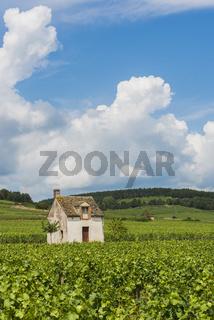 Vineyard in Beaune