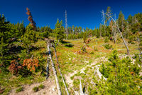 Forest in Yellowstone National Park