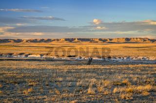 Sunset light over Colorado prairie