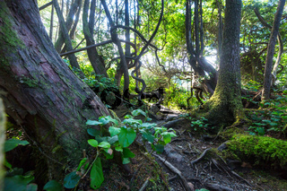Vancouver forest