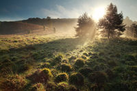 morning sunshine on hills at Totengrund