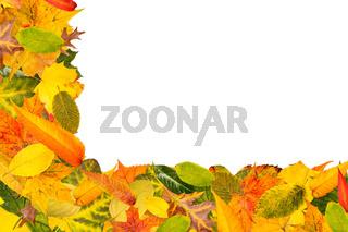 Viele verschiedene Blätter