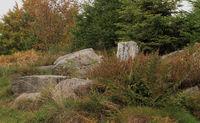 Lotharpfad im Nordschwarzwald