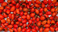 rosehip fruit texture