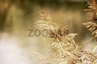 Gräser im Herbst Wind