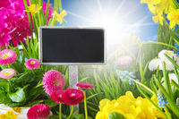 Sunny Spring Flower Meadow, Copys Space