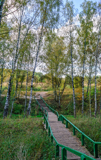 Wooden pathway across forest