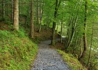 Path leading trough a beech forest. Scene at lake Klontalersee, Switzerland.
