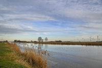 Winter am Knockster Tief in Ostfriesland