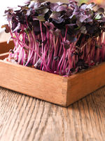 Red radish sprouts in a wooden box
