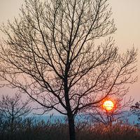 Baum Silhouette bei Sonnenuntergang