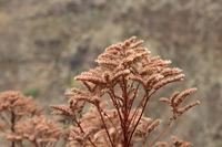 filigranes naturgras