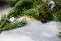 spruce branches and cones on a gray background with divorces