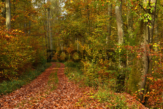 Herbswaldweg