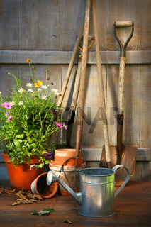 Garden tools and a pot of summer flowers in shed