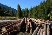 Holzstämme im  Chocholowska Tal, West Tatra, Polen