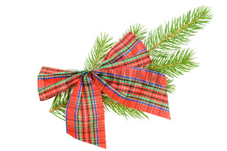 Bow and twig spruce
