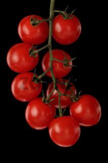 Strauchtomaten (Solanum lycopersicum)