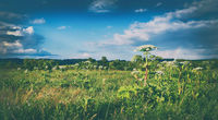 Rural landscape. Heraclium on the foreground. Panorama