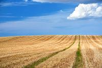 stubbelfield after harvest on sunny day