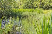 sunny wetland scenery