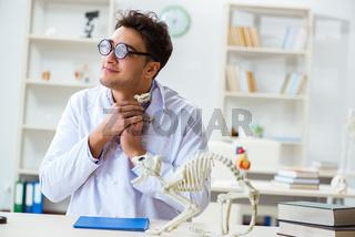 Funny crazy student doctor studying animal skeleton