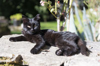 Young kitten outdoor in the sun