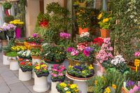 Colorful flowers at the entry to flower shop in Venice (Italy). Selective focus