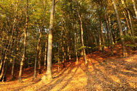 autumn colors in the woods
