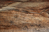 wood borers holes on spruce wooden plank