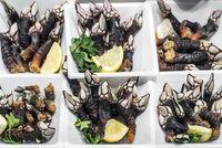 percebes goose barnacles rare unusual seafood on display in Portugal