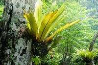 Beautiful tropical plants growing at rainforest