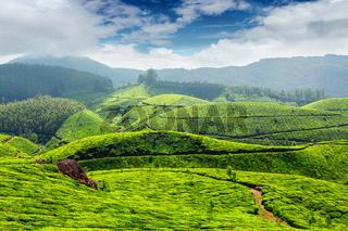 Tea plantations, India