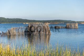 Kosi Forest, iSimangaliso Wetland Park