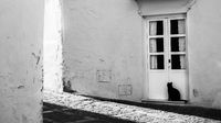 Schwarze Katze will ins Haus