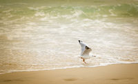 Seagull Playing On Beach