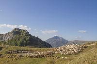 Schafherde im Monte Baldogebiet