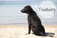 Dog At Sandy Beach, Text Thinking