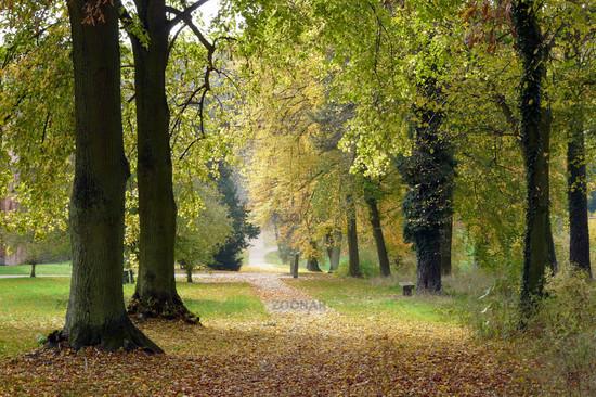 Herbstlicher Weg am Kloster Chorin