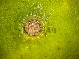 Limette Frucht