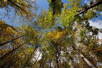 Wald aus der Froschperspektive