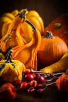 Traditional pumpkins for Thanksgiving in warm colors