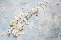 White and blue background with apple tree flowers