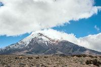 Vicugnas near stratovolcano Chimborazo, Cordillera Occidental, Andes, Ecuador