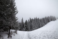 Footpath in snowy slope and frozen snow-covered spruce forest in fog