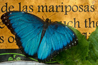 Butterfly on the background of a sign