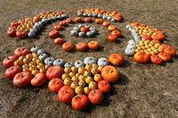 Ripe autumn pumpkins ornaments on the farm