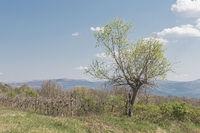 Landschaft in Inneristrien