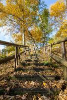 Treppe mit Laub bedeckt