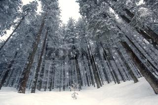 Winterwald mit Schneefall, Bayern